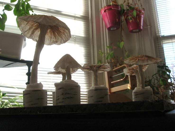 Brown toadstools, under view