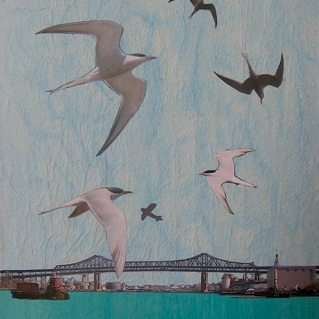 JFries MysticBirds2 Common Terns 4.2.19
