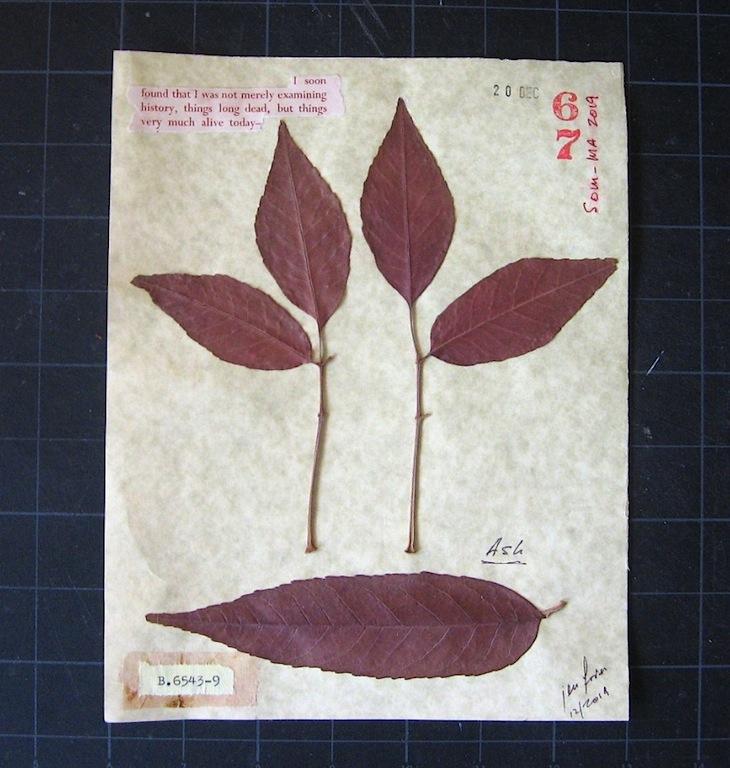 JFries Botanicals Ash 12.31.19