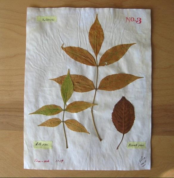 JFries Botanicals Ash & Birch 12.19
