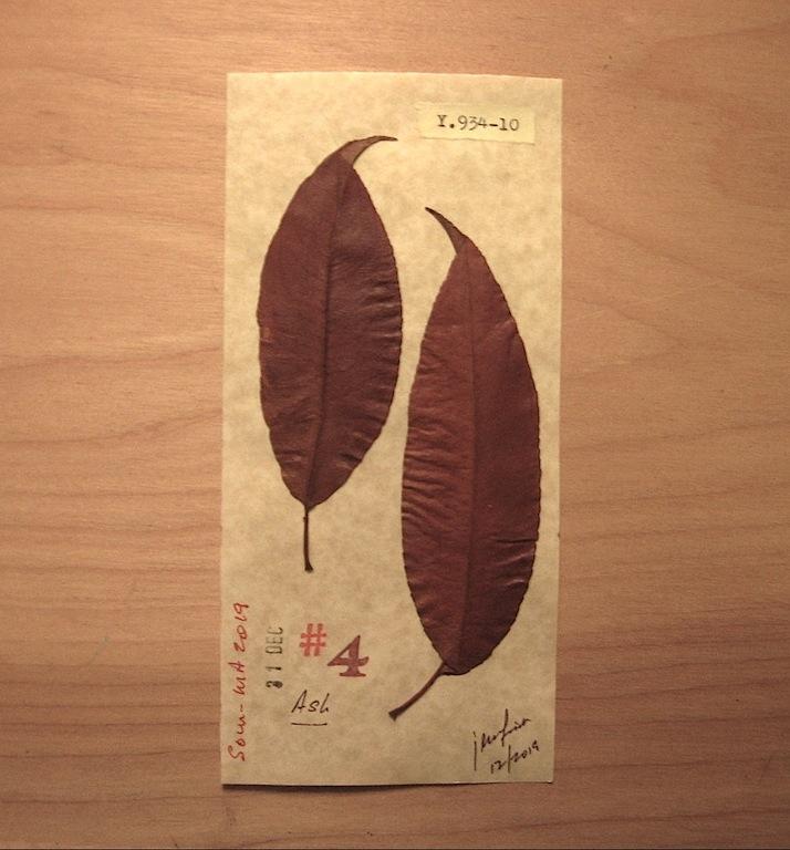 JFries Botanicals Ash.3 12.31.19