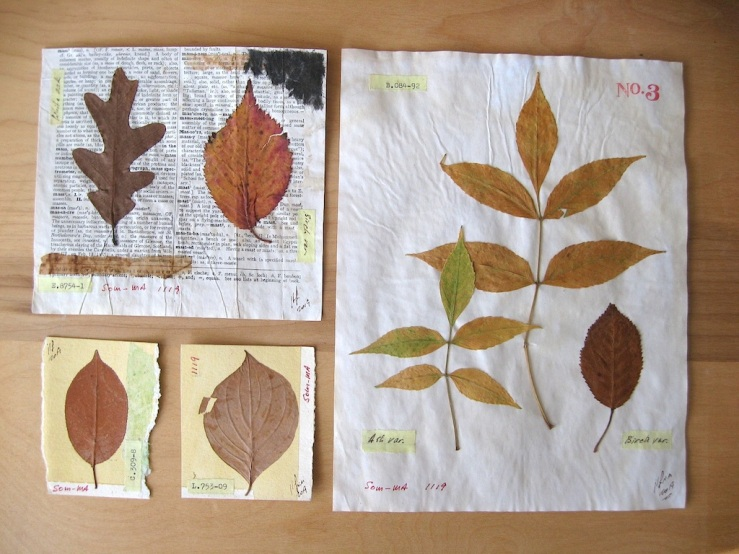 JFries Botanicals Leaves Set 1 12.19