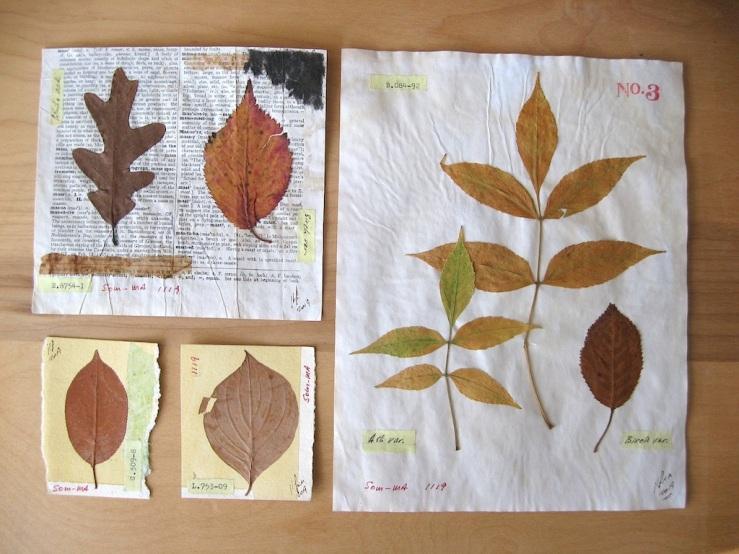 JFries Botanicals Leaves Set 1 12.19