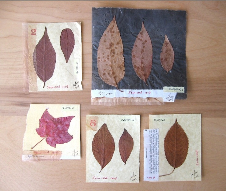 JFries Botanicals Leaves Set 2 12.19
