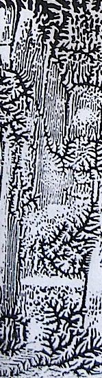 JFries bw forest light detail1 1.5.2020