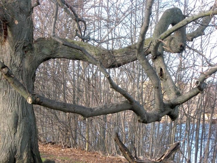 JFries tree specimen 1 1.11.2020