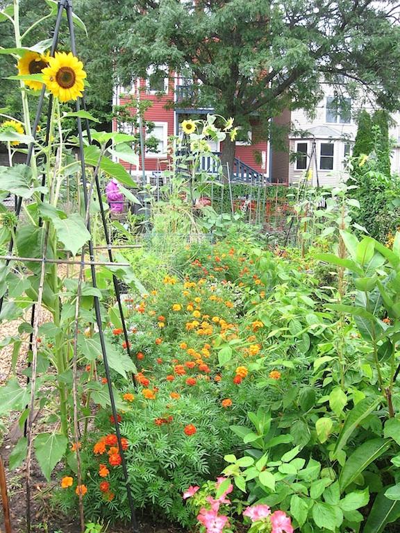 JFries garden in august sm 8.2020