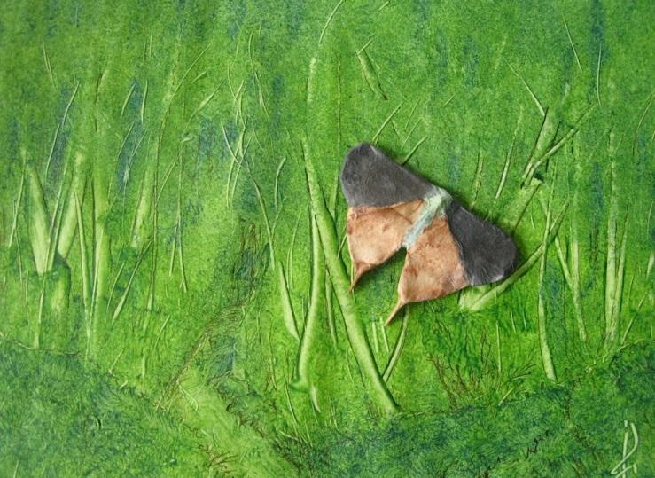JFries moth 1 1.28.21