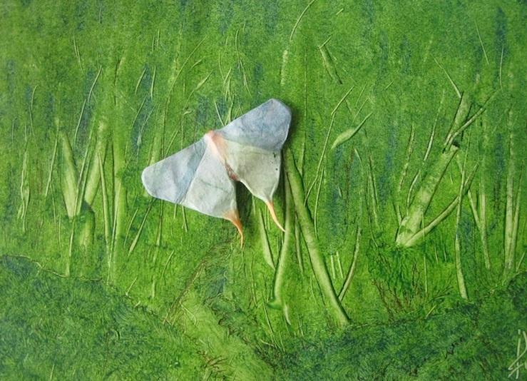 JFries moth 2 1.28.21