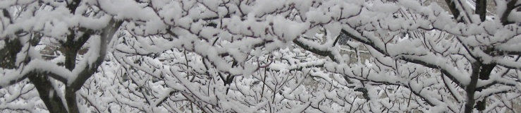 JFries snow branches border